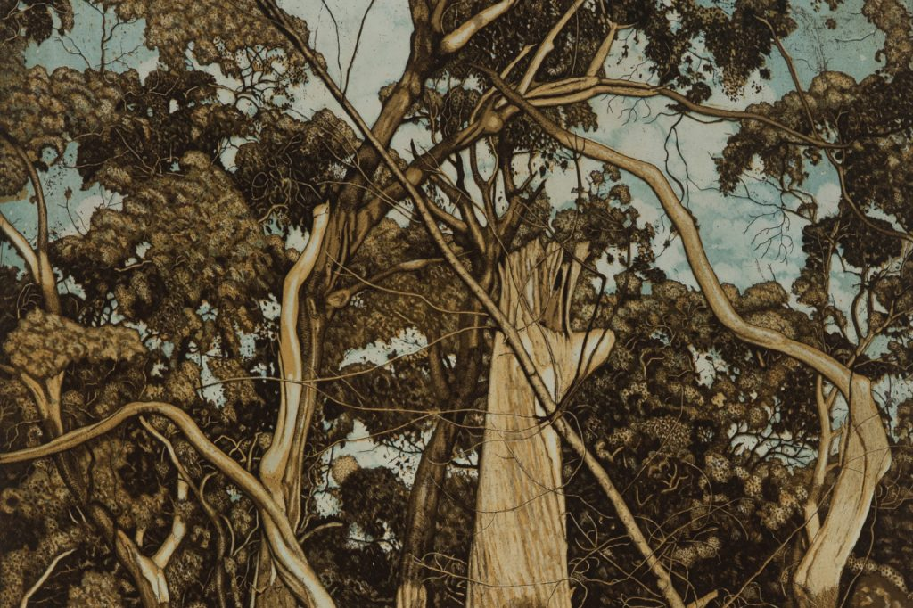 The Tangled Wood – David Frazer